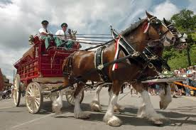 The Clydesdales are coming; Ludington Beverage celebrates anniversary